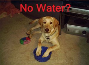 Dog has no drinking water due to well pump problems